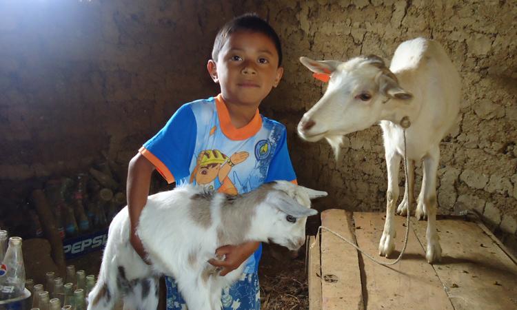 Entrega de cabras-el Quiché