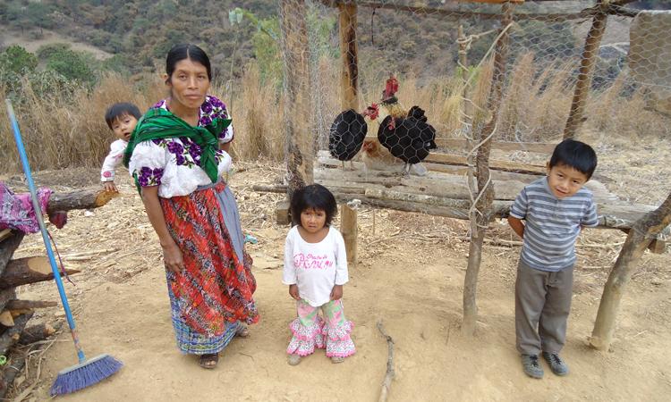 entrega de aves de corral - el Quiché