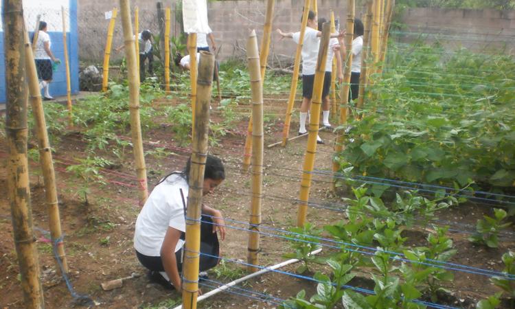 huerto-escolar El Salvador