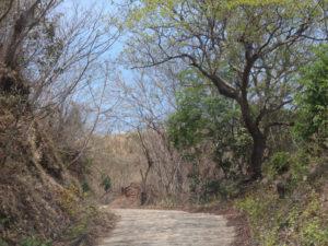 camino3