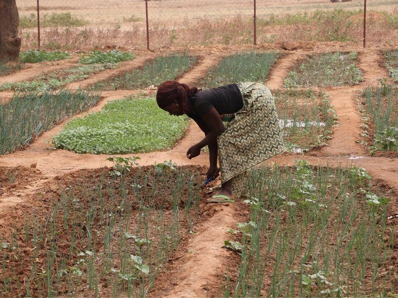 Foto Crisis de hambruna en el Sahel