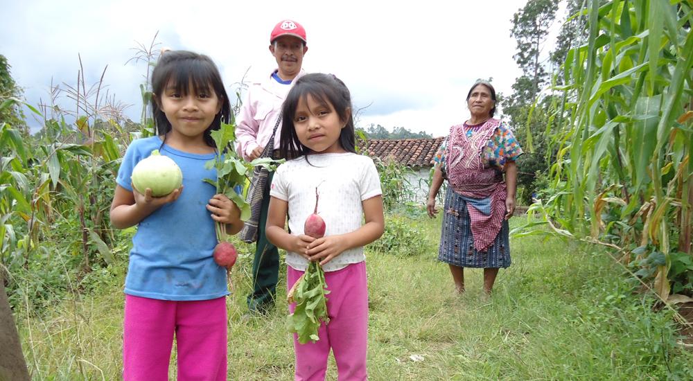 Image post ¡Tenemos verduras y hortalizas frescas!