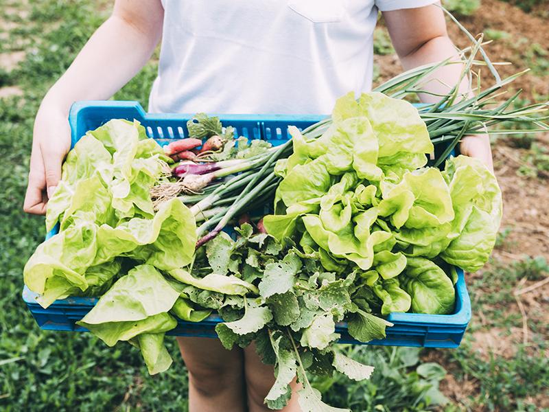 Bandeja-verduras-huerto.jpg