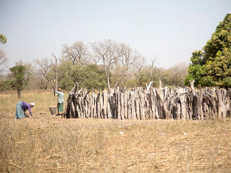 Kolda-Senegal.jpg