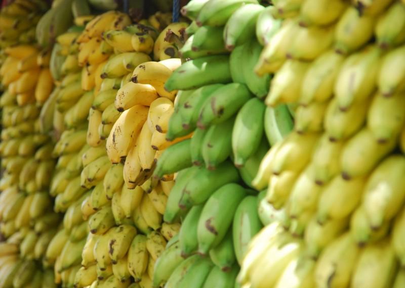 Foto de la entrada:Alimentos que dan energía para niños y niñas