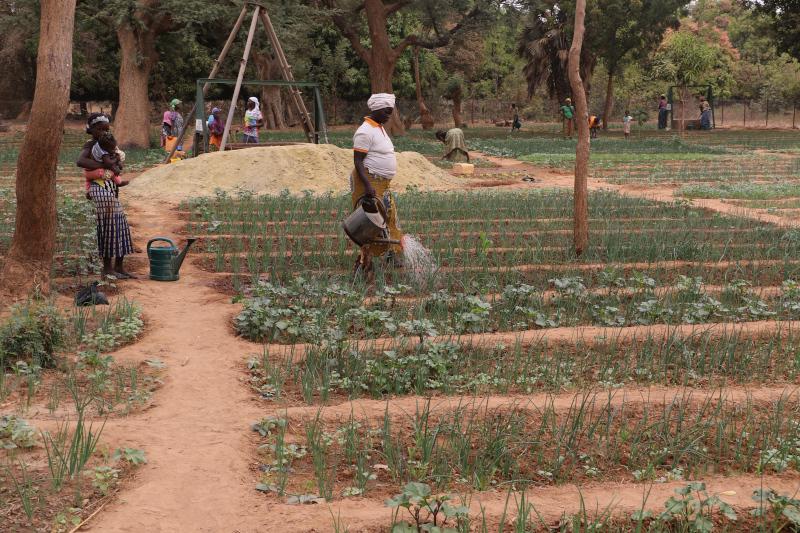 Foto de la entrada:Huertos comunitarios para mujeres en Burkina Faso