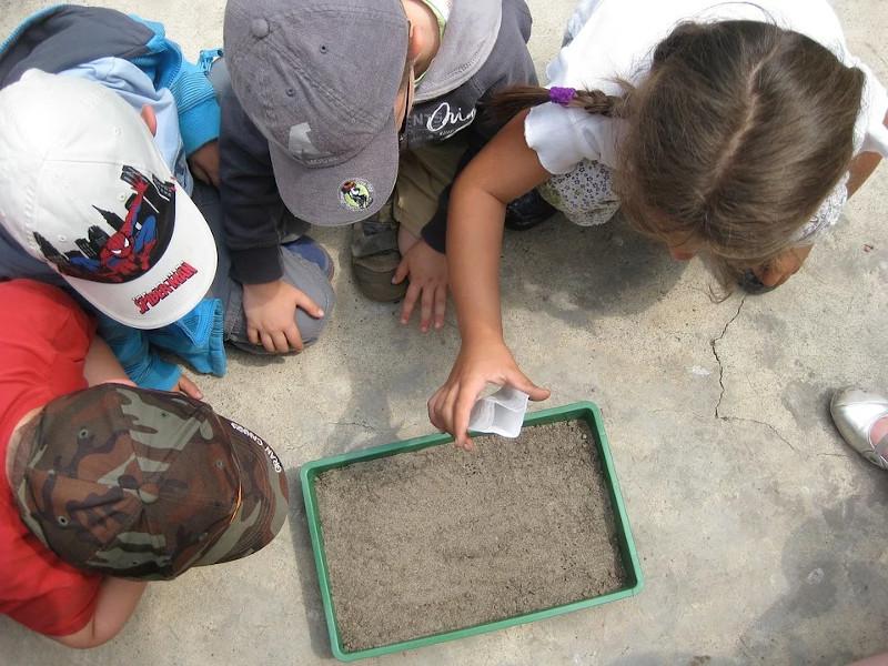 Foto de la entrada:Educación ambiental para niños y niñas: proteger el entorno y evitar otra pandemia