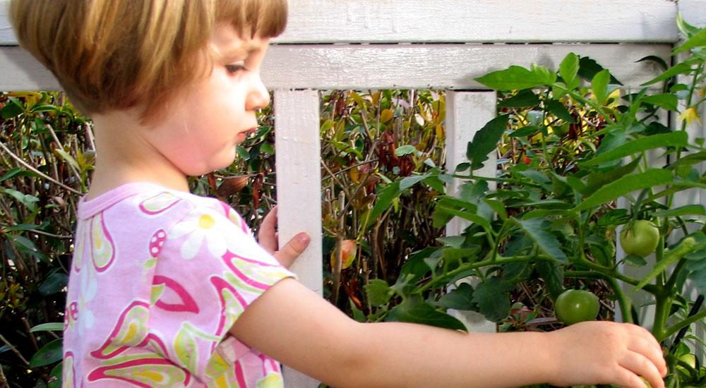 Foto de la entrada:Cultiva con tus hijos vuestro propio huerto urbano