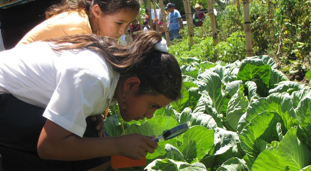 Foto Aprendiendo en el huerto de la escuela