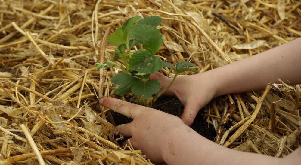Cómo cultivar la paciencia de los niños